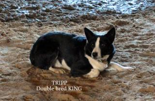 Daniel Border Collies Home       Photo