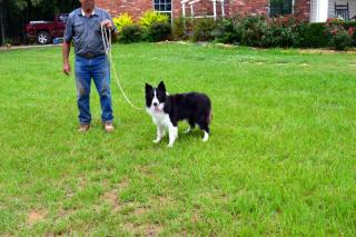 Coby Owners Charles,MandyHolt Photo