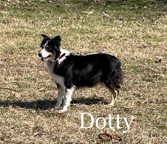 Dotty Photo