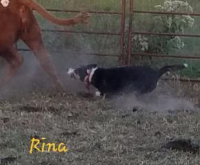 Rina* Born 9-1-2013 click* Photo